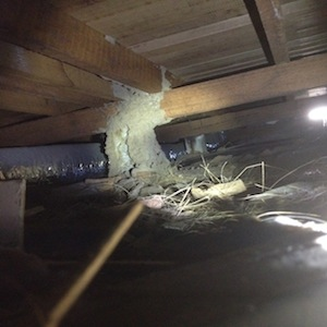 Termite Inspection Melbourne Termite Barriers Termite Protection Systems